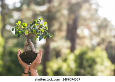 Close up with pair of people hands showing a little tree with defocused forest in background - no deforestation and save the planet - earth's day concept celebration with outdoor image