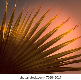 close up of a palm leaf in the sunset