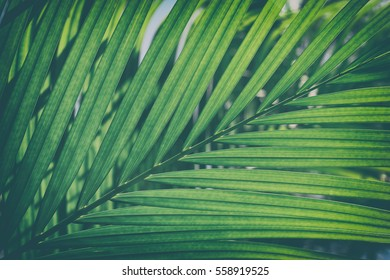 Close up of palm leaves, Abstract striped natural green background, Vintage tone