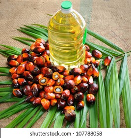 Close up of Palm Oil fruits with cooking oil and palm leaf.