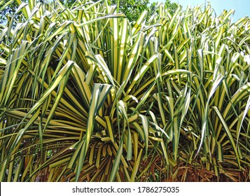 Close up palm tree branches