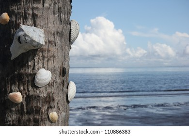 Close up of a palmetto trunk decorated with seashells with a soft focus background of beach, ocean, and clouds. (shallow depth of field)