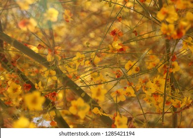 Desert Trees In Fall Images Stock Photos Vectors Shutterstock