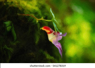 Close up of Parrot flower ,Impatiens psittacina, Balsaminaceae at Doi Luang Chiang Dao, Thailand. Digital oil paint effect.