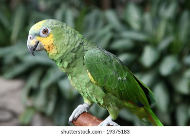 close up of a parrot waiting for food
