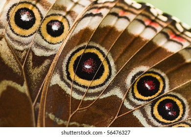 Close up part of butterfly wing from a blue Morpho