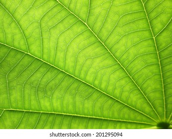 close up pattern of green  leaf surface background
