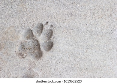 close up paw print on the concrete floor, animal footprint on the concrete floor, background of paw on concrete floor