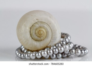 A close up of a pearl necklace on a se shell on a reflective background