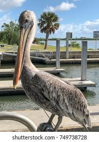 A close up of a pelican