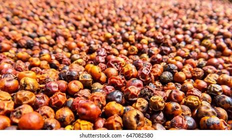 Close up pepper, Kampot, Cambodia