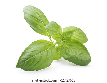 Close up of a perfect holy basil isolated on white background in full depth of field with clipping path.