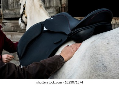 Close up of person putting black saddle on white horse.