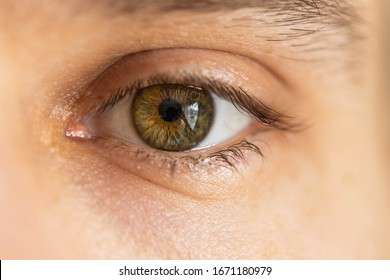 Close up of a persons hazel eye with long eyebrows and eyelashes.