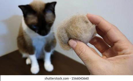 Cat Hairball Images, Stock Photos \u0026 Vectors