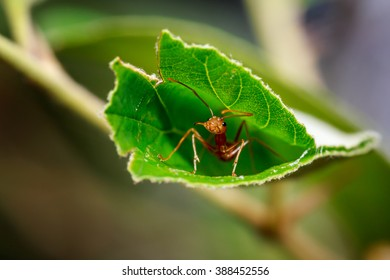 Close Up photo of the ant, sitting inside leaf (like at home)