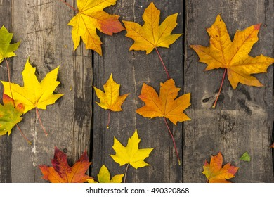 Close up photo of autumn maple leaves on wooden background.