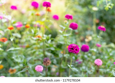 Close up photo of beautiful, awesome, colored flowers on summer garden with blurred leafs, focus on blossom head