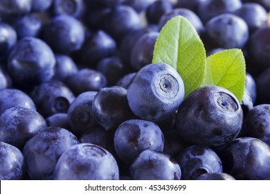 Close up photo of blueberries. Fresh ripe juicy bilberries, bright autumn colorful background. Concept for healthy diet with berries. Selective Soft focus