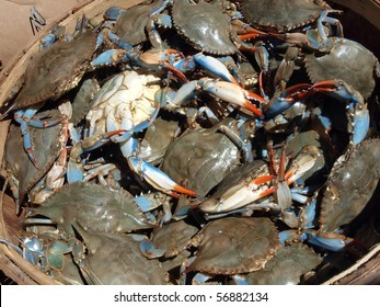 close up photo of a bushel basket of live blue crabs from the Chesapeake Bay of Maryland