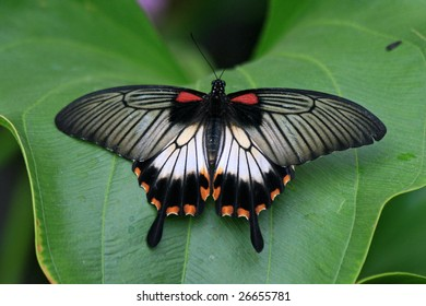 A close up photo of a  butterfly