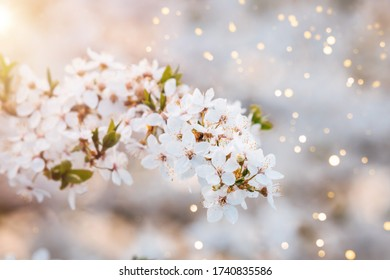 Close up photo of cherry blossoms brunch with beautiful bokeh.