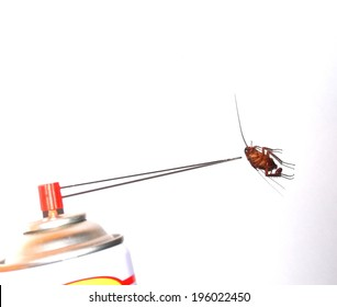 Close up photo of cockroach show the whole body with cockroach egg with insect killer spray point to the head action on isolated white background
