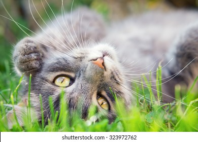 Close up photo from a cute domestic cat playing outdoor