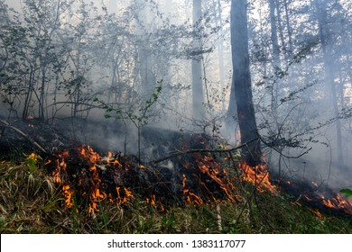 Close up photo of a forest fire in progress.