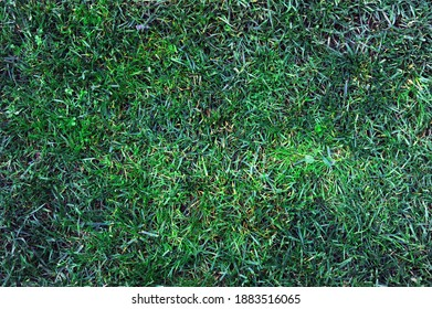 close up photo of grass can be used as background wallpaper  - Shutterstock ID 1883516065