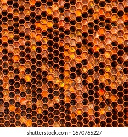 Close photo of the honeycomb