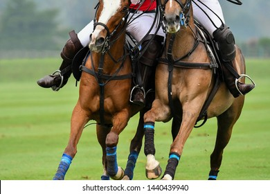 Close up Photo of the horse are Battle for the Polo match.