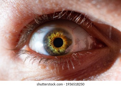 Up close photo of a human eye