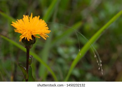 close up photo of orange flower in soft focus
