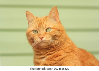 Close up photo of red cat with green eyes