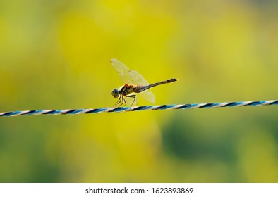 Close up photo of red dragonfly