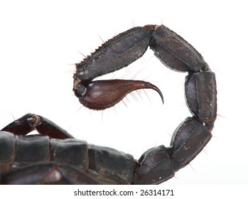 a close up photo of a scorpion stinger