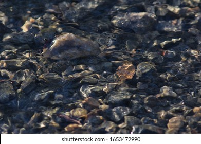 Close Up Photo of a Shallow Babbling Brook, With Many Pebbles and Rocks Illuminated by the Later Afternoon Sunlight
