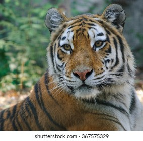 close up photo of tiger