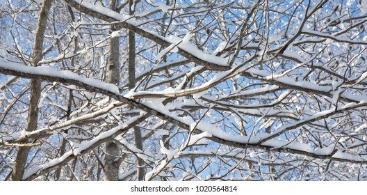 Close up photo of tree branches covered in snow with a blue sky creating a great background.