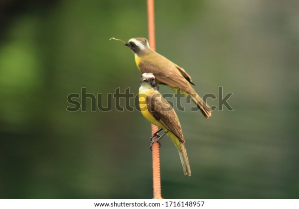 Close up photo of two birds on a string