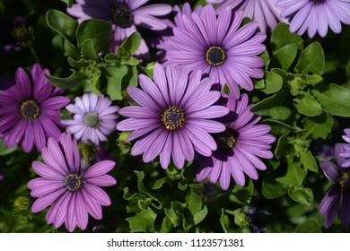 close up photo of white and purple flowera