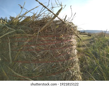 Close up photograph of Babala Millet seed grass bales tied with orange string on a cut grass field