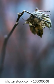 A close up photography of a dried  flower