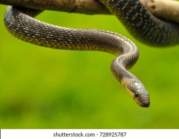 Close up photography of an exotic snake on a tree branch