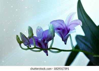 close up photography of a orchid flower