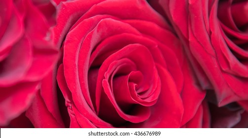 Close up photography of red roses flowers petals for romantic, love, wedding, Valentine's day background