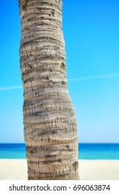 Close up picture of a coconut palm tree trunk with blurred beach in distance.