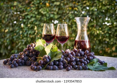 Close up Picture of the fresh picked riped red wine grapes with green leaves and two glasses and carafe of decanter with red wine in sunny summer evening light.
