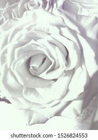An up close picture of a rose